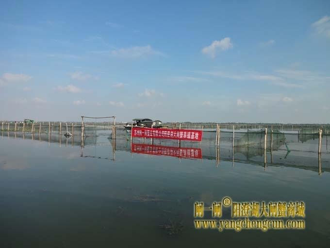 阳澄湖大闸蟹养殖基地